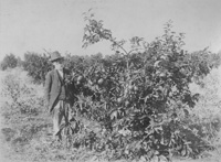 Clayson with his Fruit Trees
