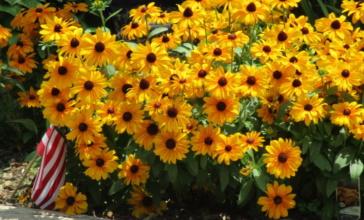 gardenfall-16-009-1-768x576